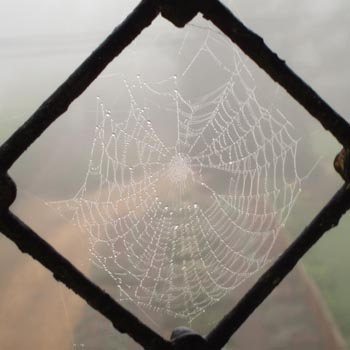 Spider's web, 404, The Spa, Melksham