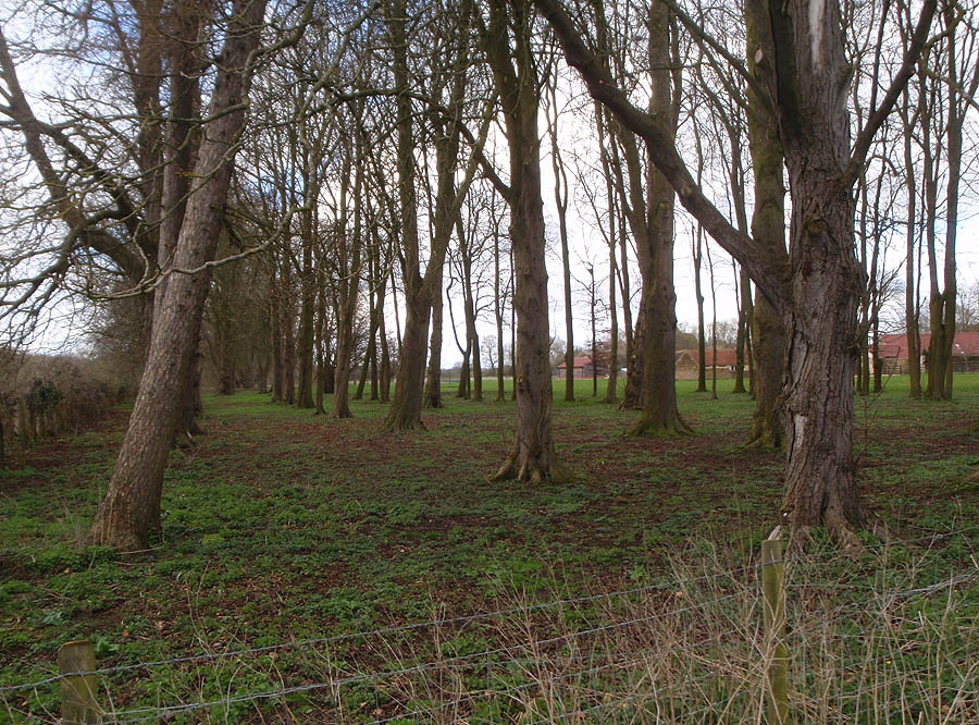 Mature Woodland at Beanacre