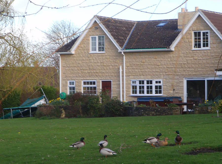 Ducks in the garden, Shaw