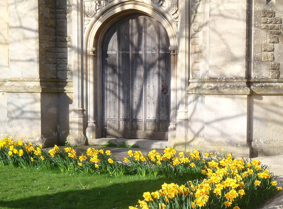 Daffodils at Shaw Church
