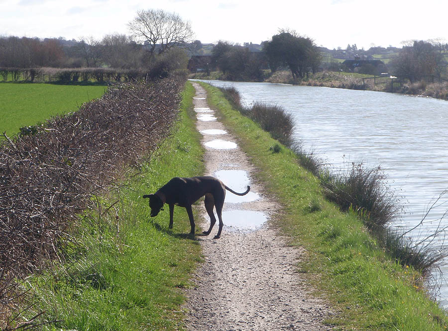 Dog on Canal Bank