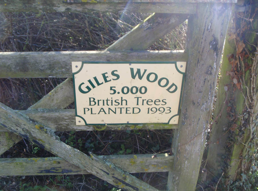 Giles or Freddies Wood