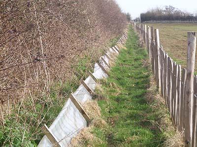 Amphibian Fence