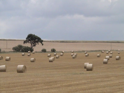 Hay Bales on the Marlborough Downs