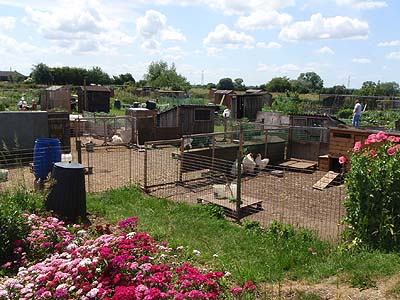 Allotments at Berryfield