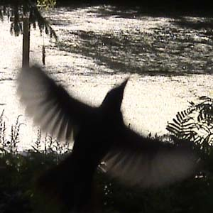 Silhouette of a bird