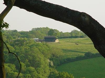 Across the valley, horse graze