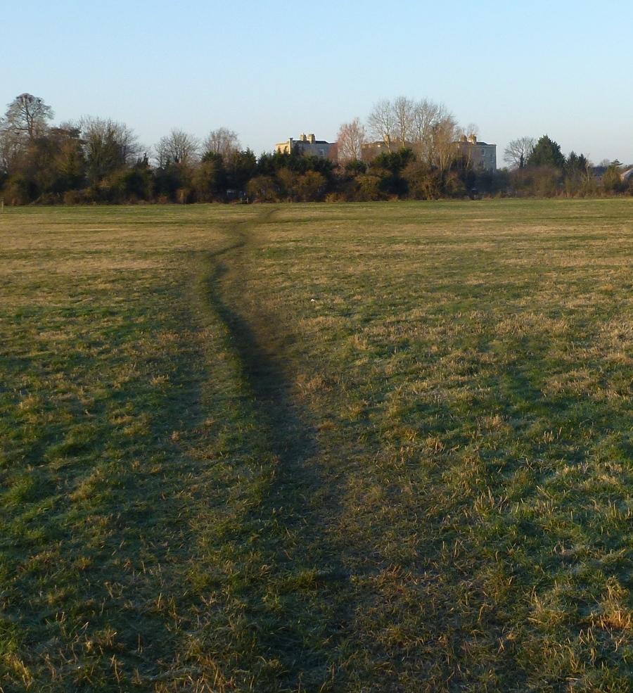Cold Field