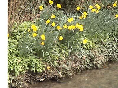 Spring in Castle Combe