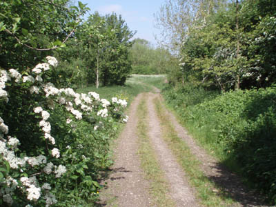 The track into the Conigre Mead nature reserve