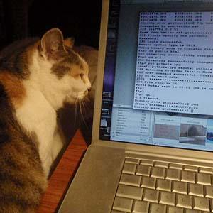 Cat at the keyboard