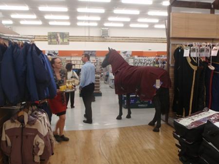 Horsey  - Countrywide, Melksham