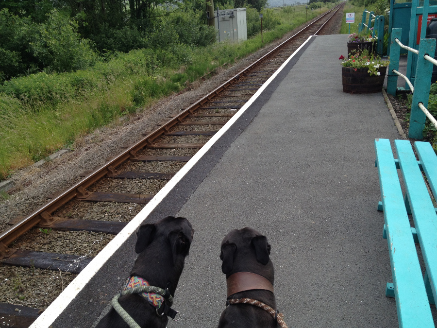 Awaiting the train at Tygwyn