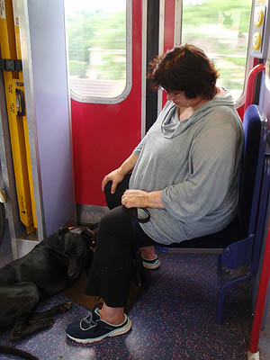 Taking your dog on a train