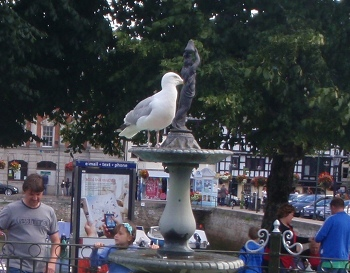 Seagull, Dartmouth