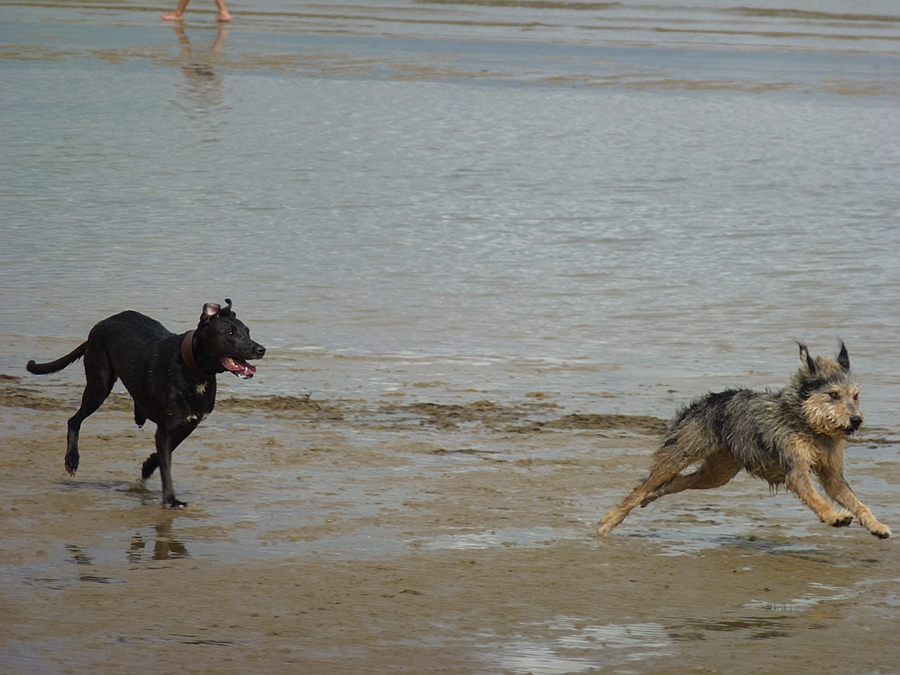 Dogs on the beach, Weymouth