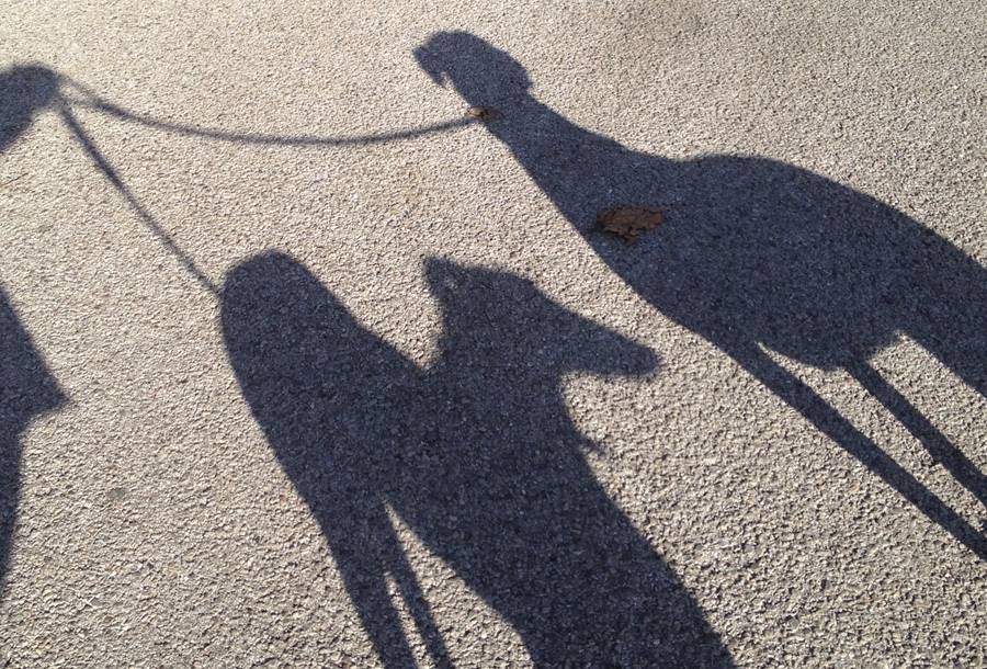 Dog Shadows