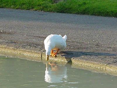 On Biddestone Pond