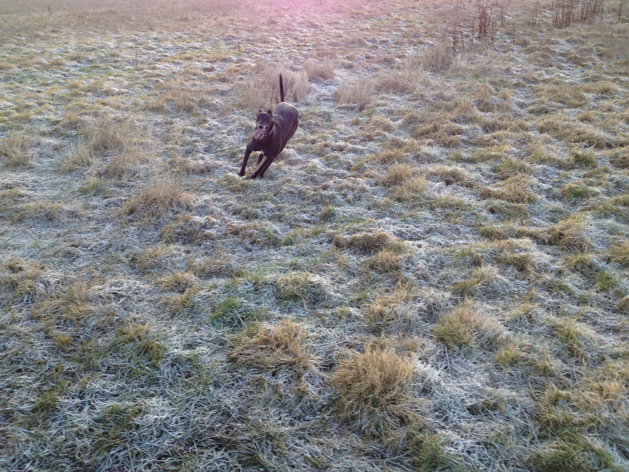 Billy in the frost