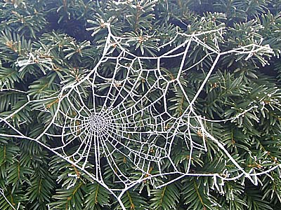 web on fir