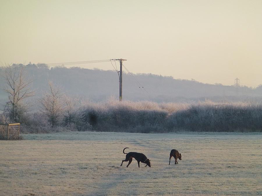 Walking dogs in the field