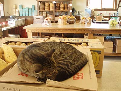 The store cat - good ole country store, near Gettysburg