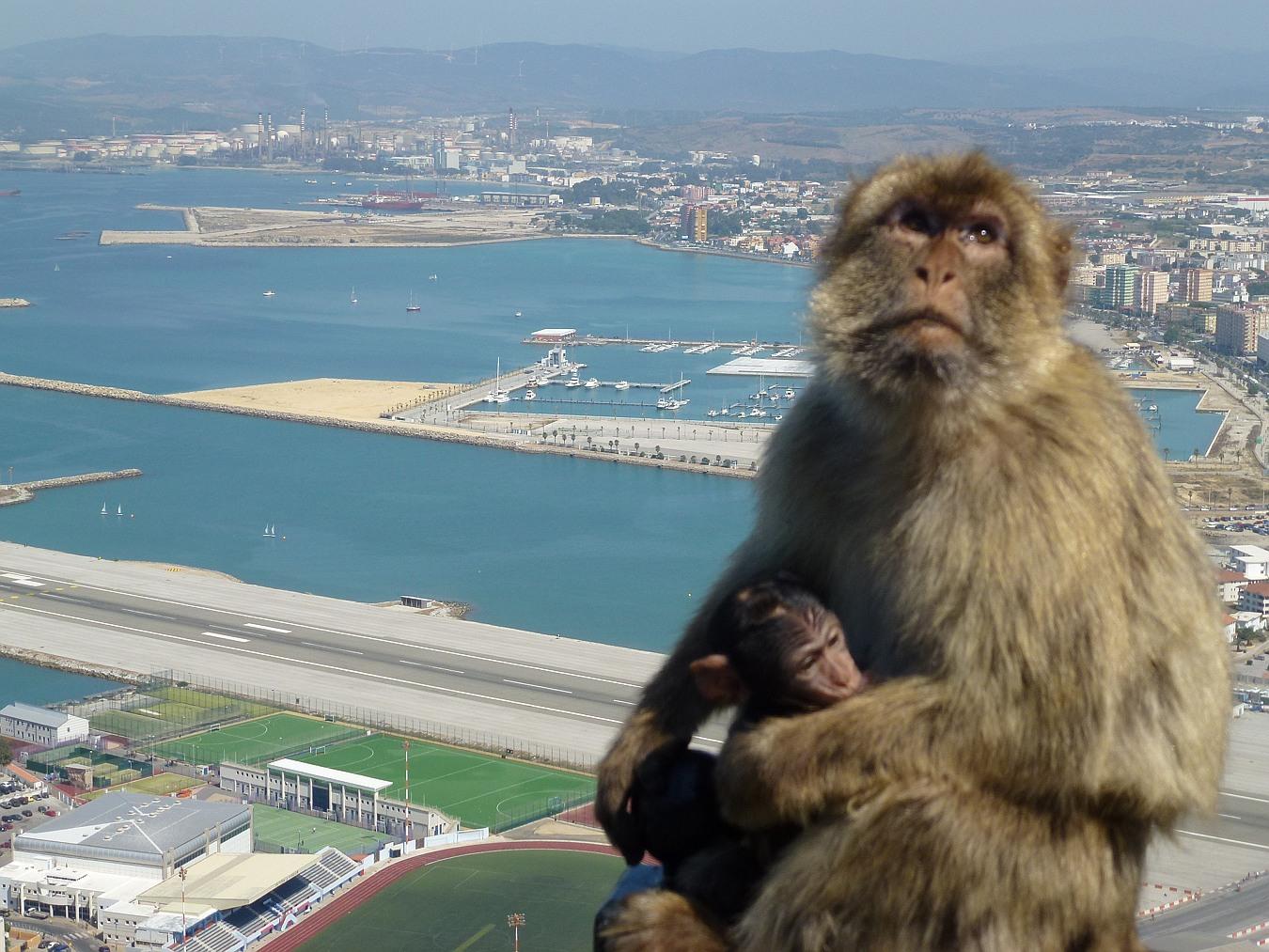 Portrait of Gibraltar