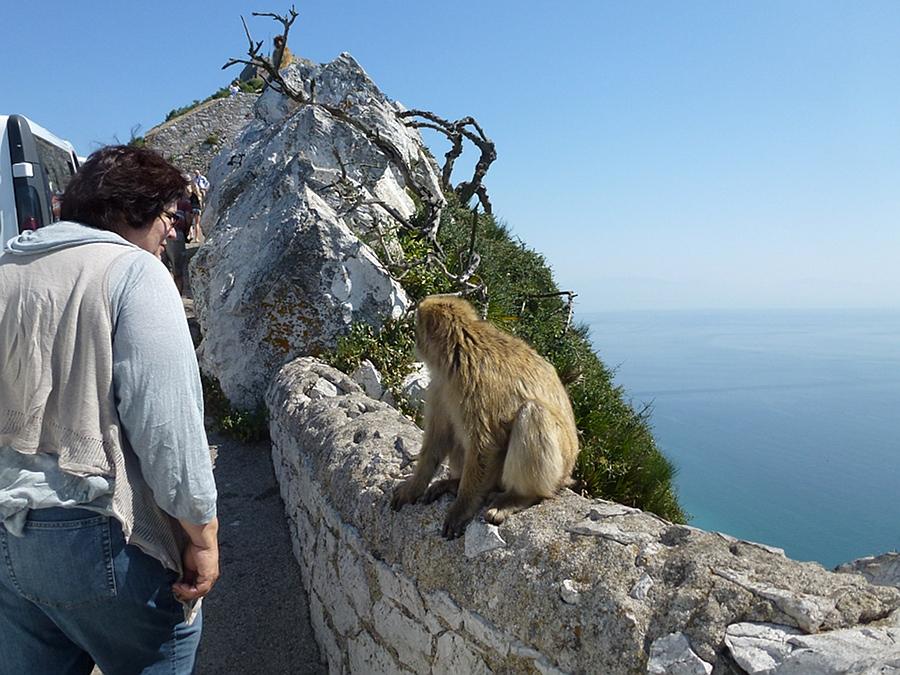 Meeting the Roack Ape