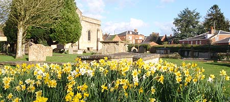 Flowers in Devizes