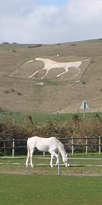 Types of White Horses