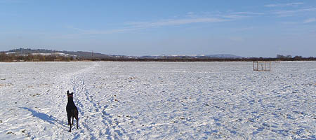 Dog in field in snow
