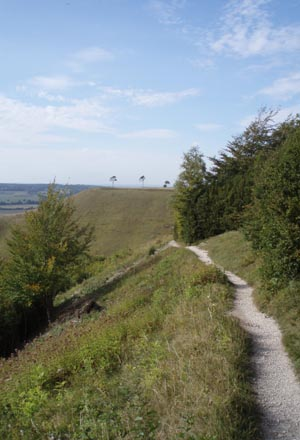 Roundway Hill Covert and Olivers Castle