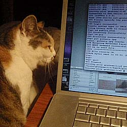 Would she be studying Tomcat?   We provide Tomcat training