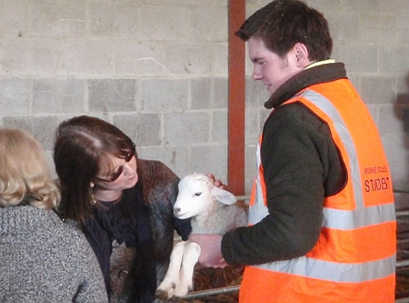 Visitors can (supervised) stroke the lambs