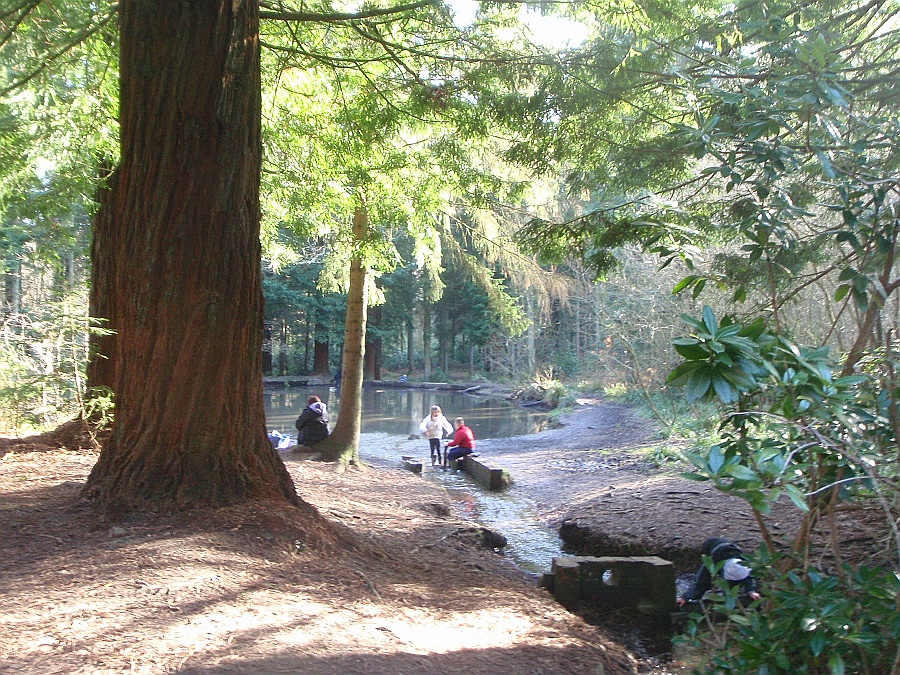 Longleat Forest
