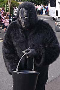 Gorilla collecting Money