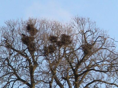 Rookery at Melksham Spa