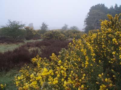 Norfolk Heathland
