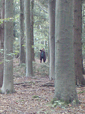 If you go down to the woods today ...