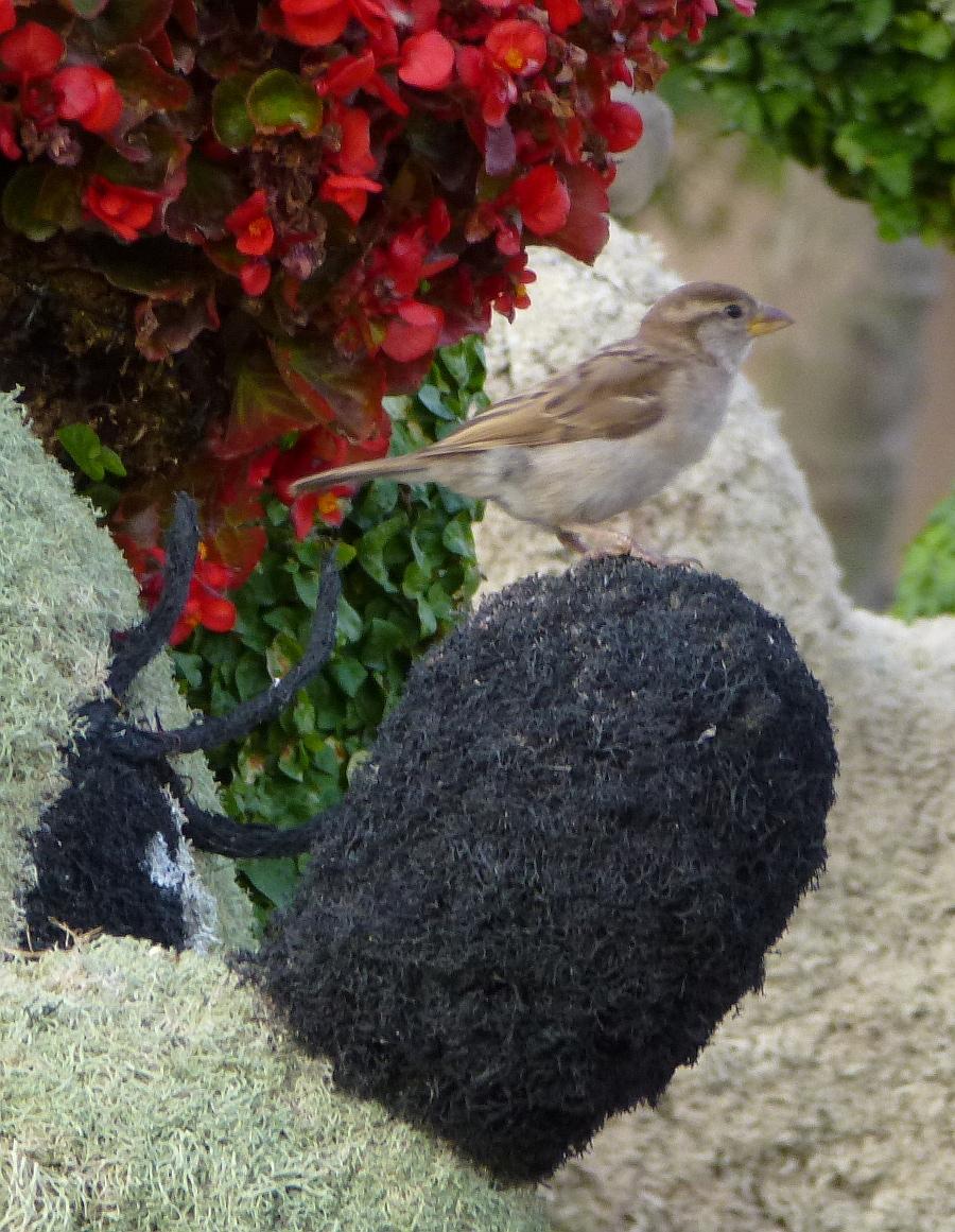 Epcot Sparrow