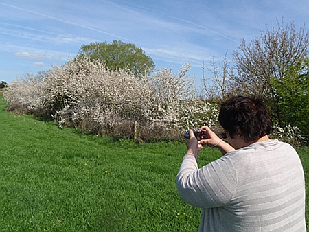 Taking pictures of blossoms
