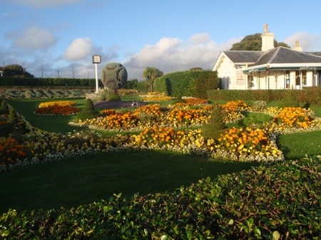 Flowers on the Hoe