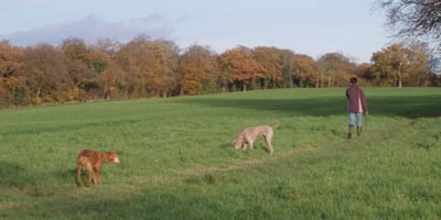 Walking the dogs, Potterne