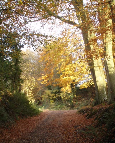 Potterne Woods in Autumn