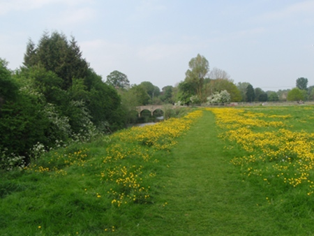 River, field, Bridge and Buttercups