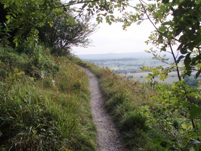 Roundway Hill Covert