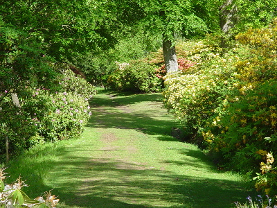 Rhododendron walk, Bowood, Wilts