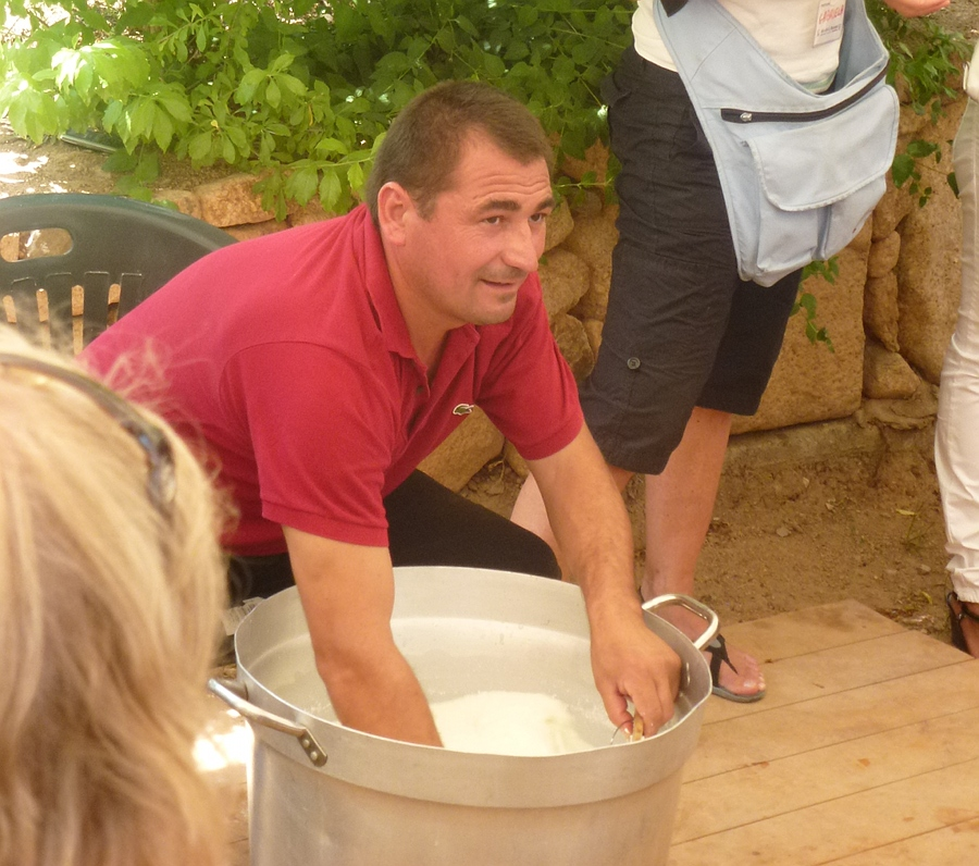 Cheese making demo. Man with hands in bucket.