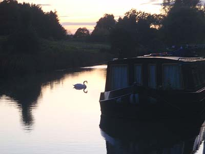 Swan and boat on Canal