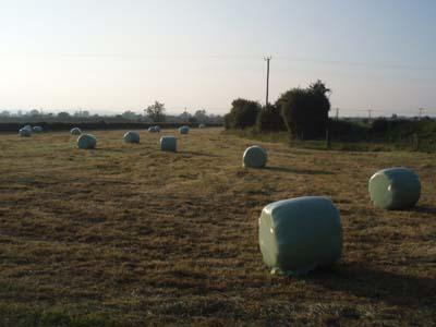 Haymaking - Seend